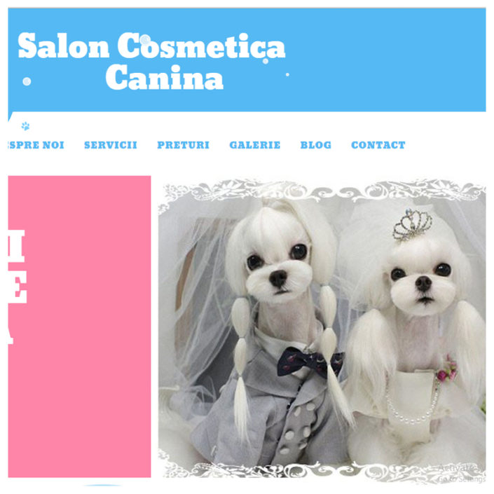 web design salon canin