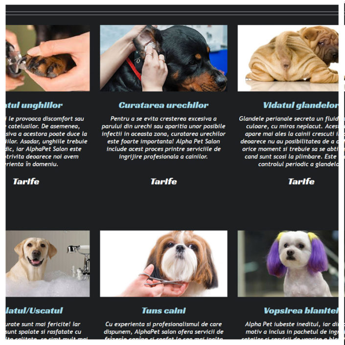 web design profesional AlphaPet